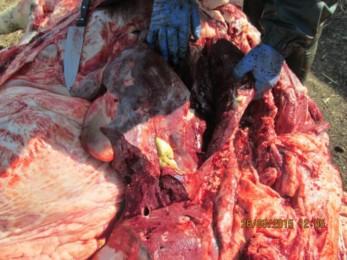 Цирроз Печени Атрофический фото