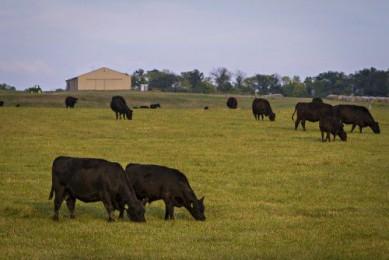 Виды болезней коров: схемы лечения, обзор